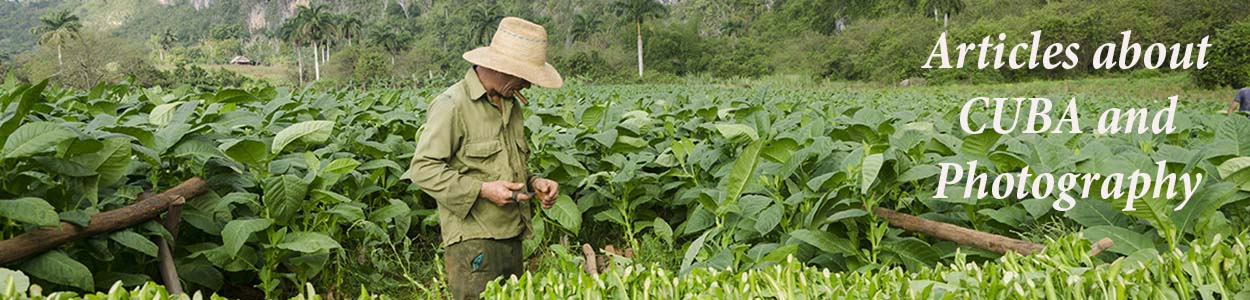 a man recollecting tobacco in cuba in my photo tours to cuba