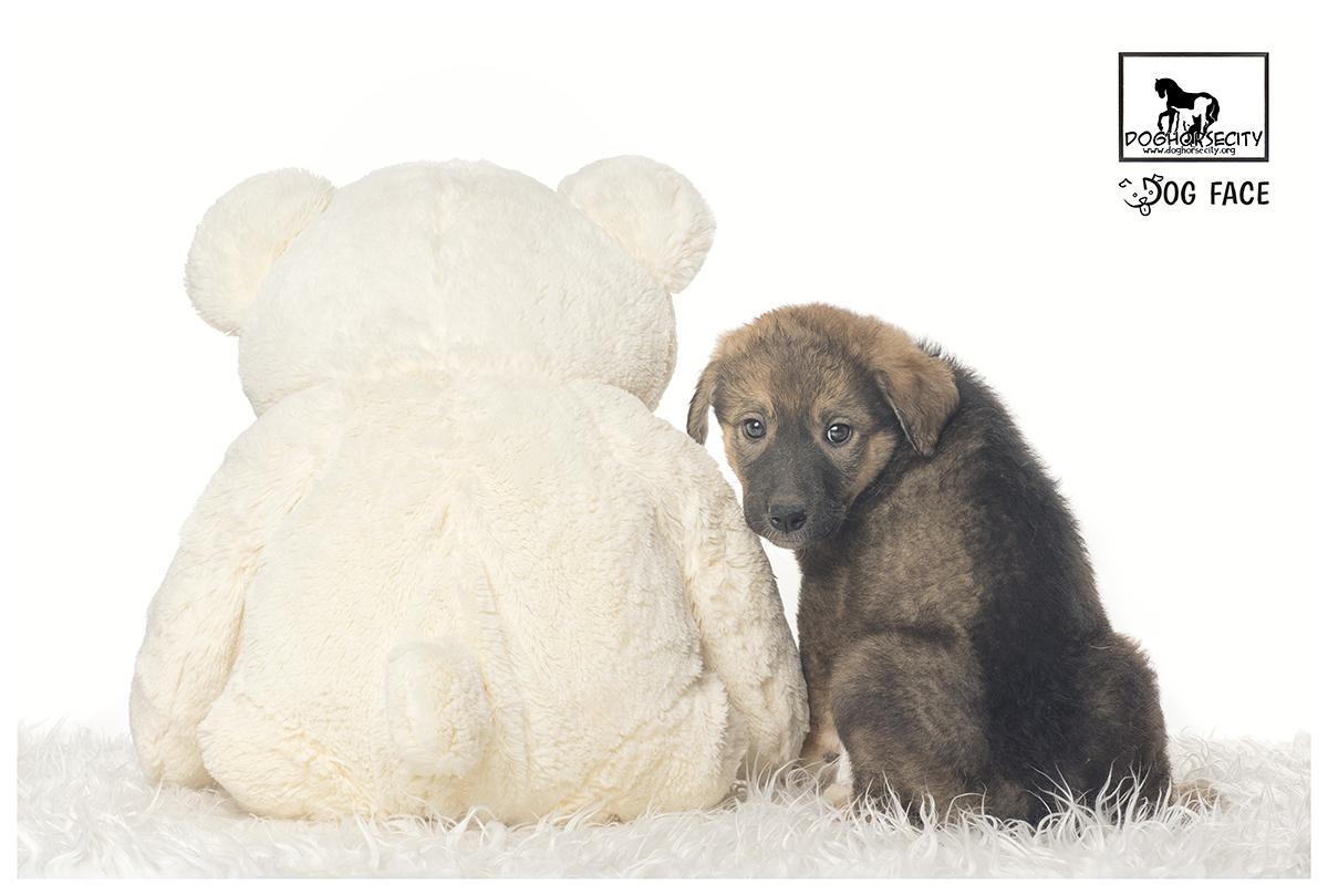 Lena en Adopción, contacto: Dogcity