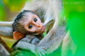 Curious baby monkey