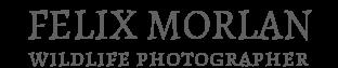 FELIX MORLAN - wildlife photographer