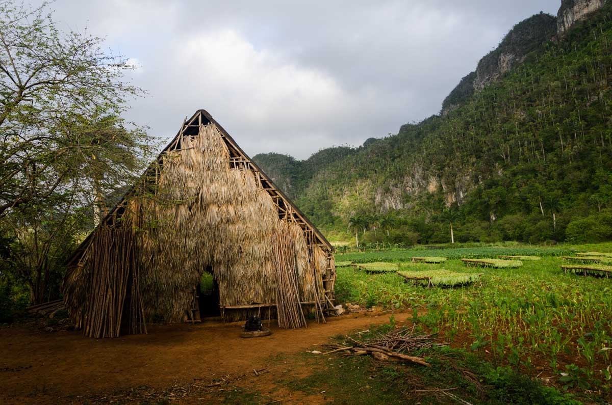 tobacco land in cuba. photography taken in vinales by louis alarcon