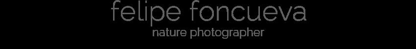 felipe foncueva - nature photographer
